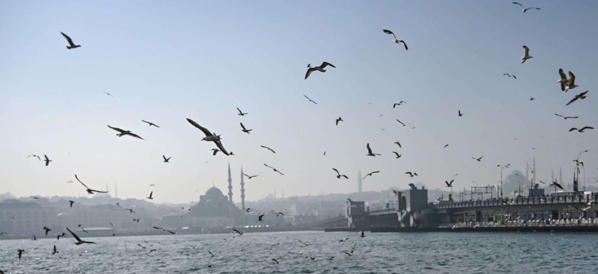 Seagulls over the Bosphorus